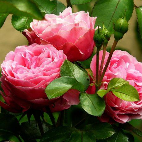 flores para ramo de novia rosas